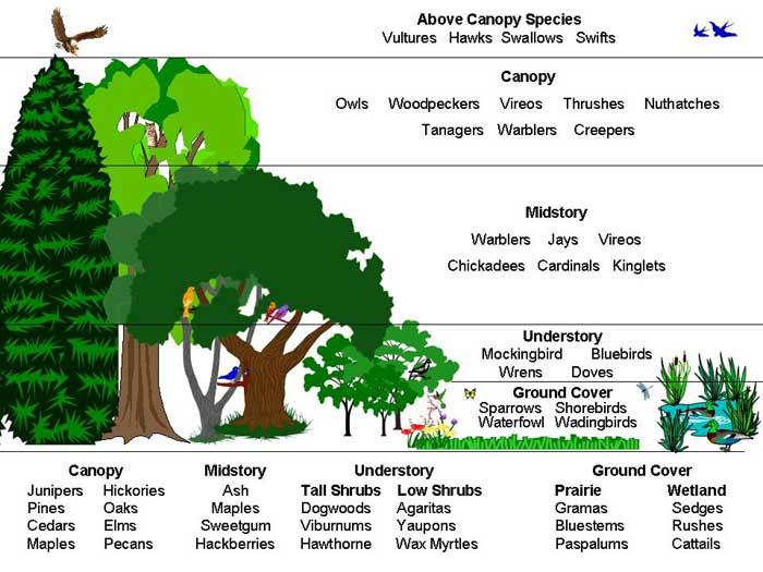 The Human Tree Relationship Cindyisenhour
